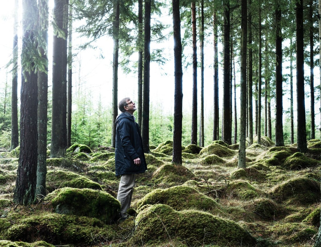 Man gazing towards the treetops in a pine forest.